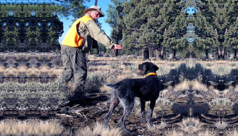 how to train a dog for bird hunting